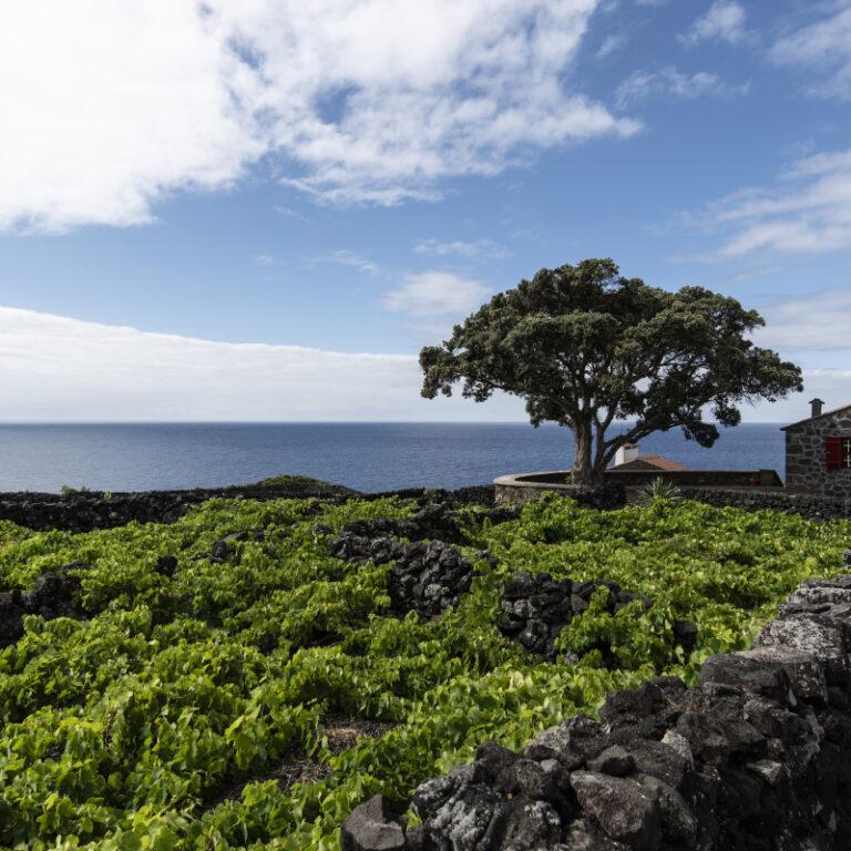 Açores, um mundo novo para (re)descobrir | Unibanco