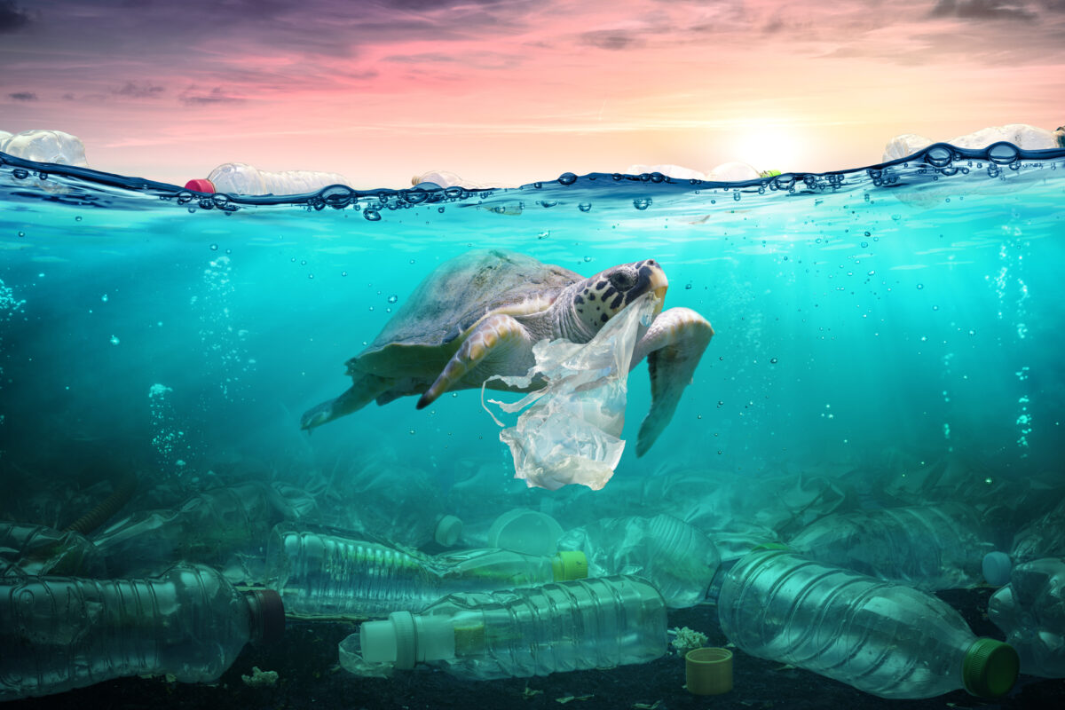 Dia Mundial do Ambiente: 5 hábitos (mais 1) para ajudar a salvar o Planeta | Unibanco